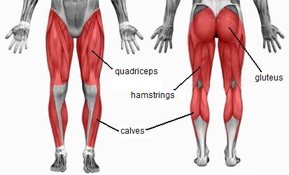Quads, Glutes, Hamstrings and Calves